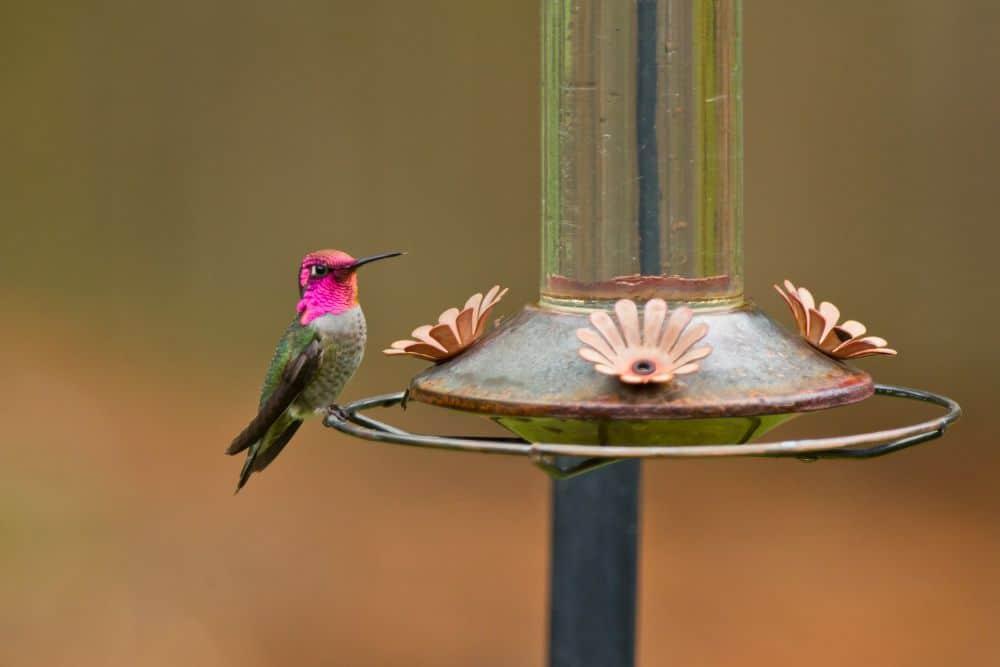 How to Pick a Hummingbird Feeder