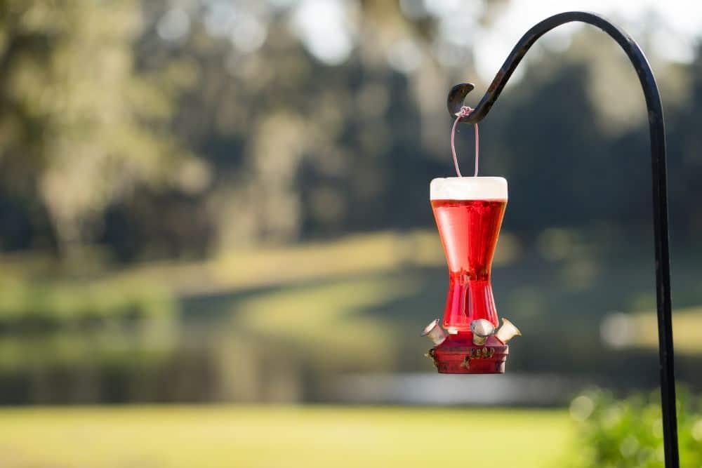 How to Make Hummingbird Nectar at Home