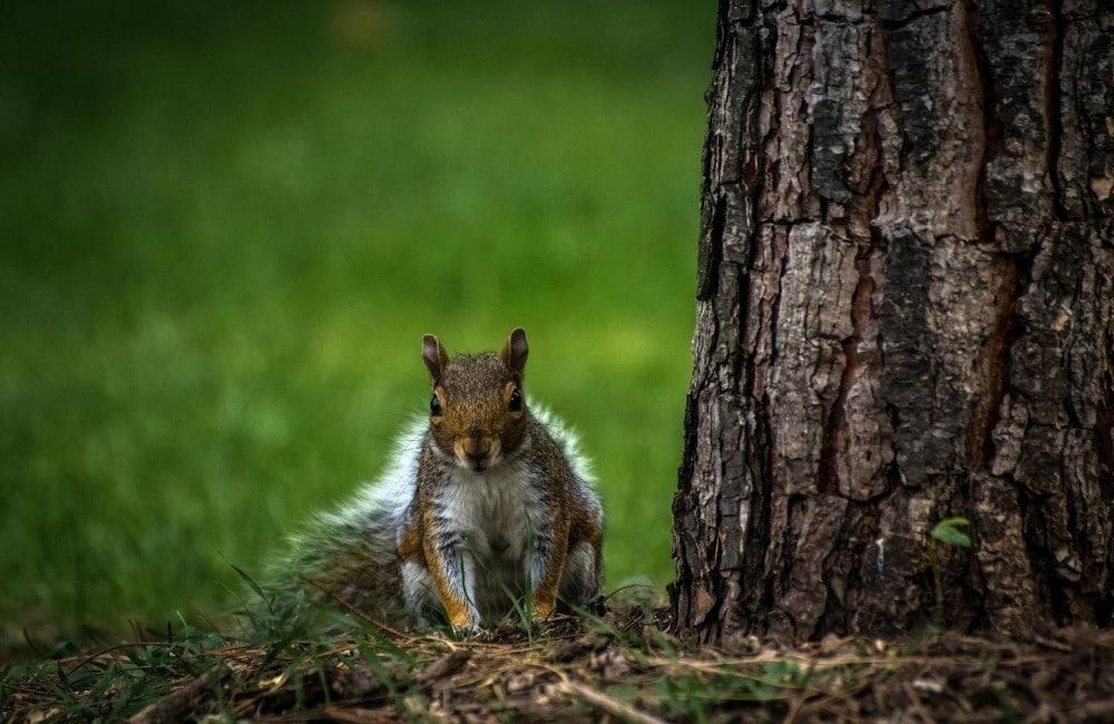 Think Like a Squirrel