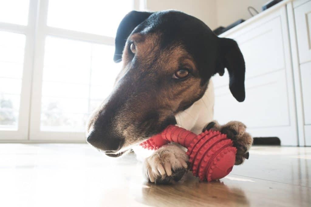 Best Dog Chew Toys