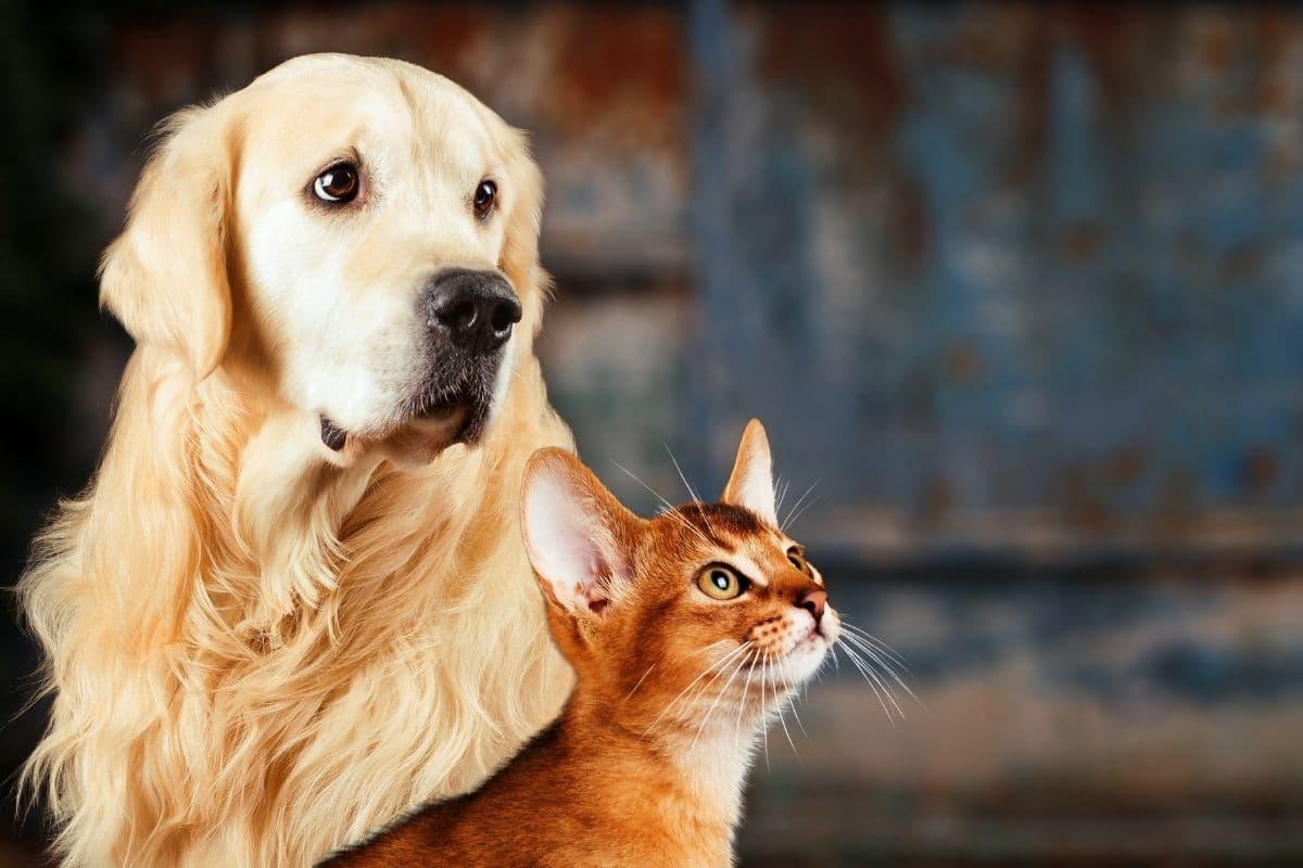 Cat Fleas vs. Dog Fleas