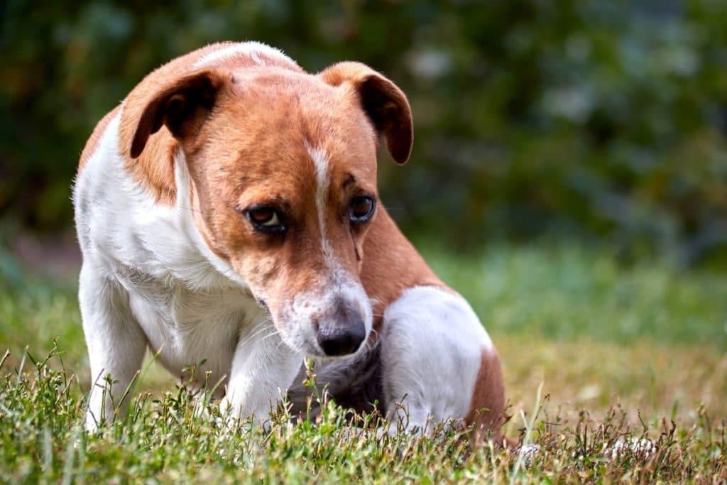 Dog After Digging