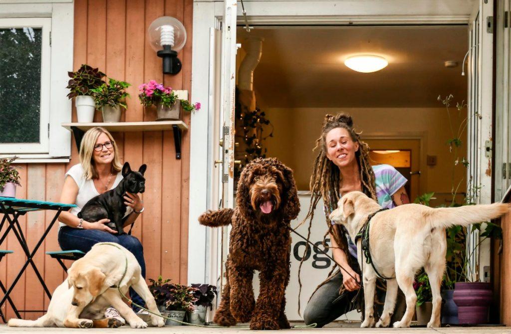 Benefits of Dog Daycare