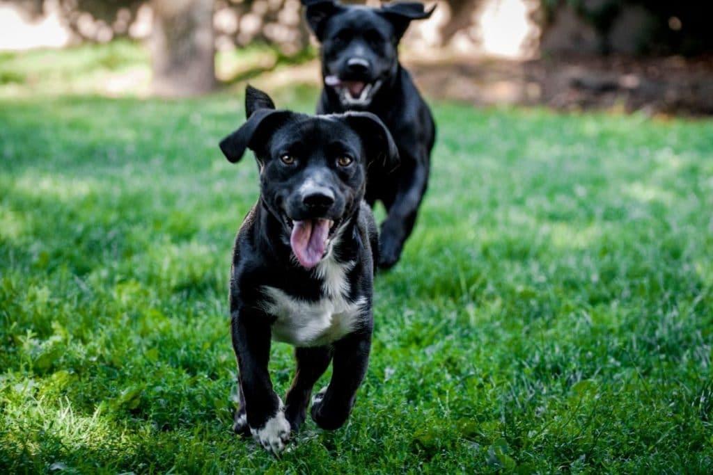 Benefits of Dog Daycare - Exercise & Friendship