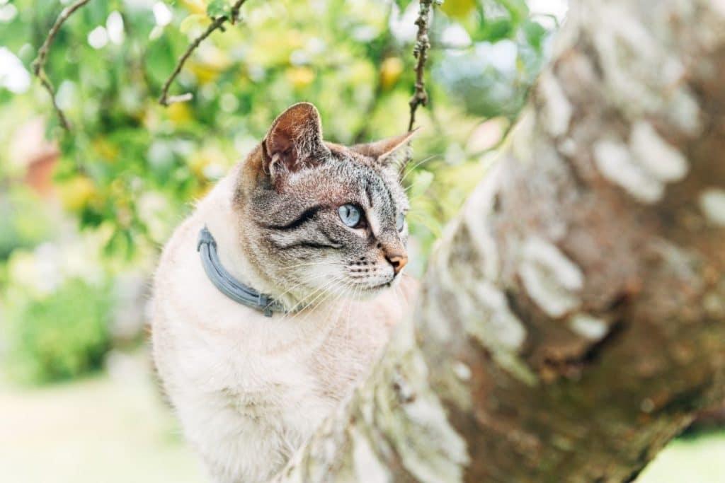 Best Cat Flea Collar on a Cat in a Tree