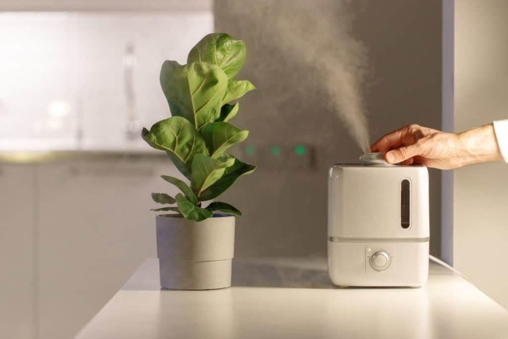 Humidifiers vs Dehumidifiers