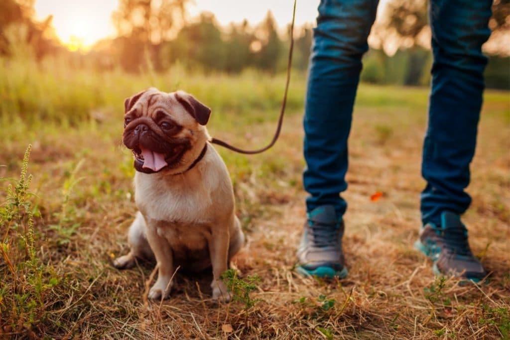 Low Energy Dog on Walk