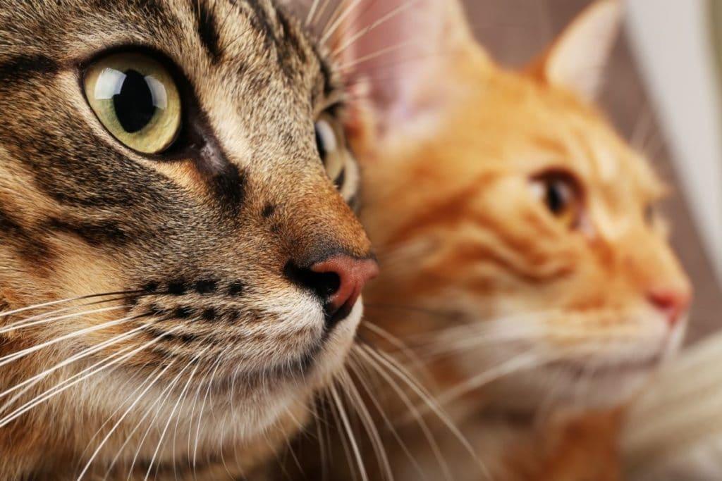 Male vs. Female Cats