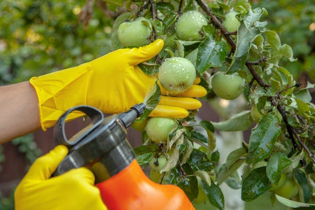 The Best Garden Sprayers