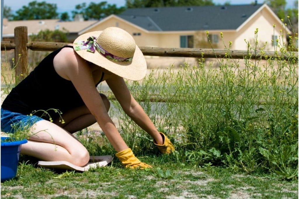 Pulling Weeds while gardening