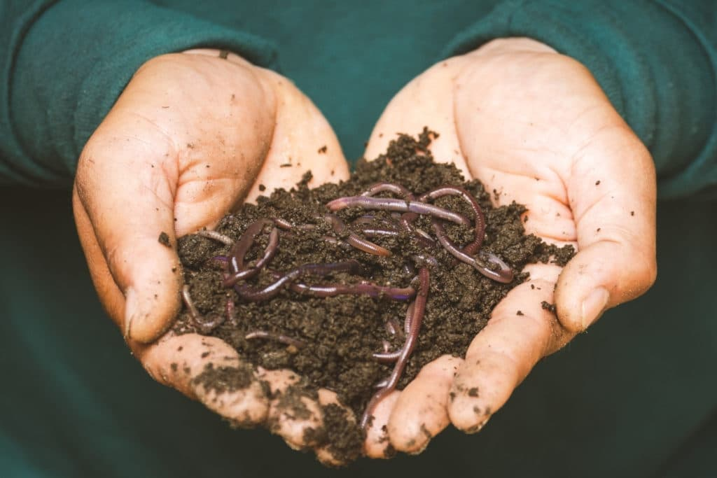 best worm composters