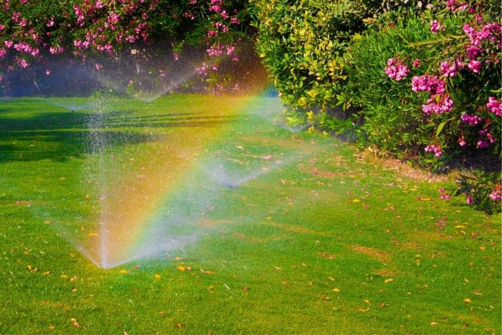 when is the best time of day to water the lawn