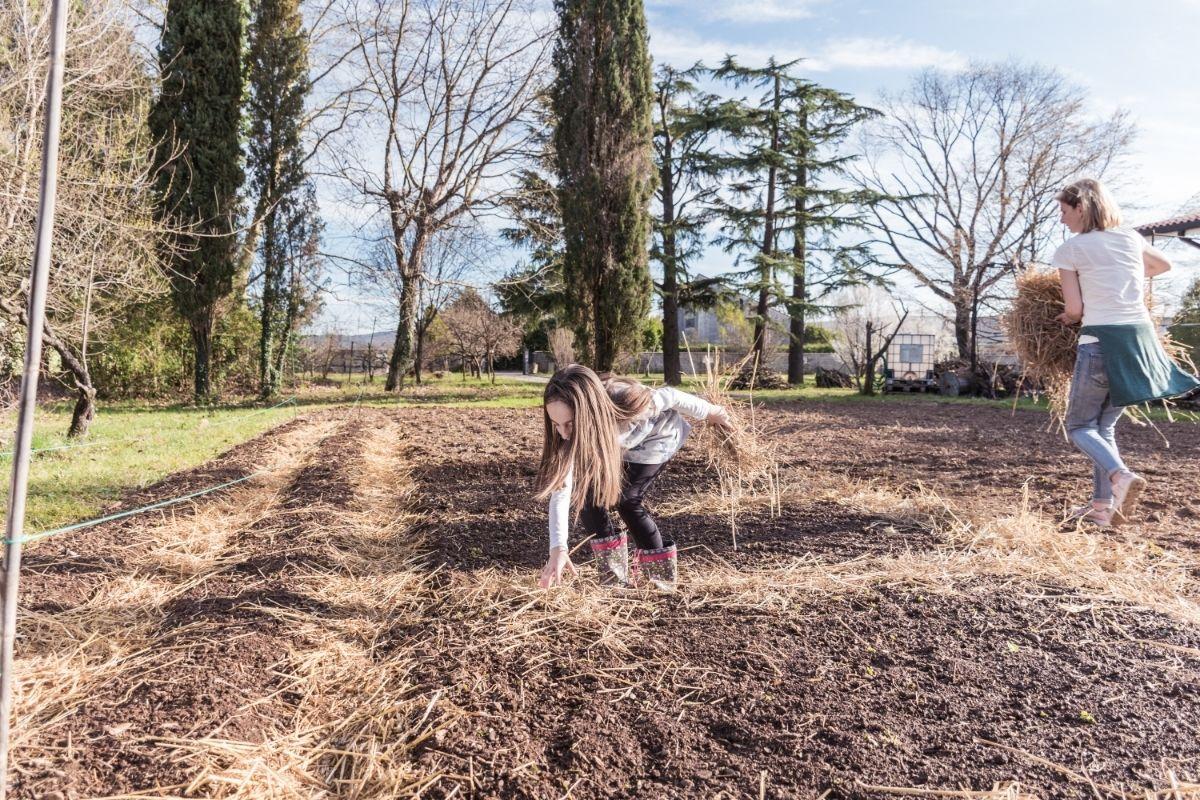 Best Mulches for your Vegetable Garden
