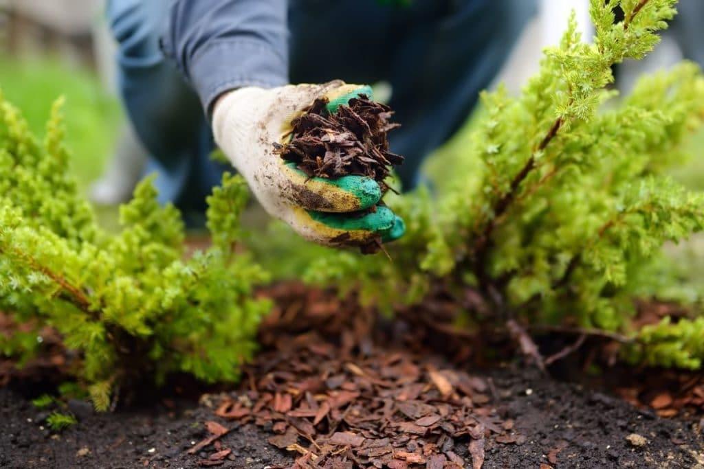 best mulch for vegetable gardens