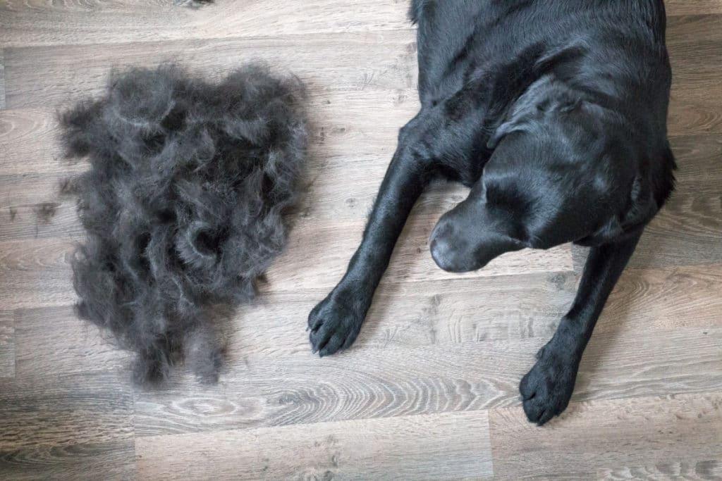 types of dog brushes